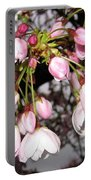 Vancouver Cherry Blossoms Portable Battery Charger