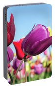 Velvet Red And Purple Tulip Flowers Closeup Portable Battery Charger