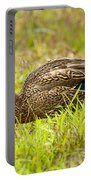 Vermont Mallard Portrait Portable Battery Charger