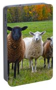Vermont Sheep In Autumn Portable Battery Charger