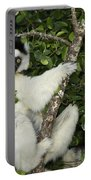 Verreaux's Sifaka Portable Battery Charger