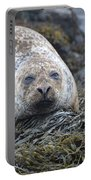 Very Chubby Harbor Seal Portable Battery Charger