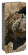 Very Cute Face Of A Wild Squirrel In California Portable Battery Charger