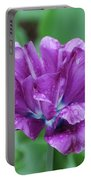 Very Pretty Purple Tulip With Dew Drops On The Petals Portable Battery Charger