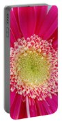 Vibrant Pink Gerber Daisy Portable Battery Charger