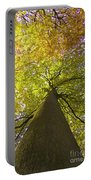 View To The Top Of Beech Tree Portable Battery Charger