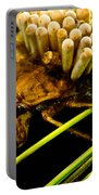 Water Beetle Brooding Eggs Portable Battery Charger