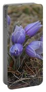 Watercolor Pasque Flowers Portable Battery Charger
