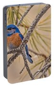 Western Bluebird Male In A Pine Tree.  Portable Battery Charger