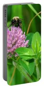 Western Honey Bee On Clover Flower Portable Battery Charger