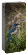 Western Scrubjay Portable Battery Charger