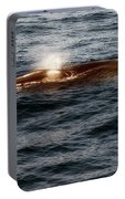 Whale Watching Balenottera Comune 7 Portable Battery Charger