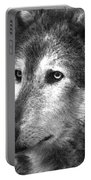 What Is A Wolf Thinking Portable Battery Charger