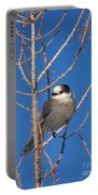 Whiskey Jack Perched On A Winter Larch  Portable Battery Charger