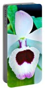 White And Purple Orchid In Greenhouse At Pilgrim Place In Claremont-california Portable Battery Charger