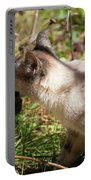 White Cat On The Hunt  Portable Battery Charger