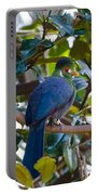 White-cheeked Turaco Portable Battery Charger