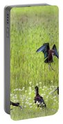 White-faced Ibis Preparing To Land Portable Battery Charger