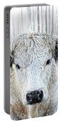 White Park Cattle In The Snow Portable Battery Charger