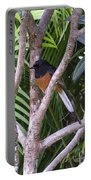 White Rumped Shama Portable Battery Charger