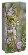 White Sage In Rancho Santa Ana Botanic Garden In Claremont-california  Portable Battery Charger