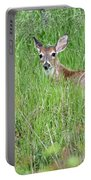 White-tailed Deer Bedded Down In Tall Grass Portable Battery Charger