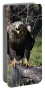 White Tailed Eagle Screaming Nature Wildlife Scene Portable Battery Charger