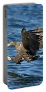 White-tailed Eagle Taking Fish Portable Battery Charger