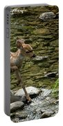 White-tailed Fawn At Vichy Springs Resort In Ukiah Portable Battery Charger