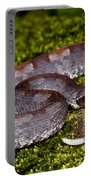 White-tailed Hognose Viper Portable Battery Charger