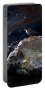 White-throated Dipper Nr 2 Portable Battery Charger