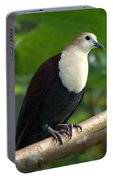 white-throated ground dove Gallicolumba xanthonura Male Portable Battery Charger