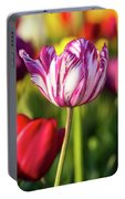 White Tulip Flower With Pink Stripes Portable Battery Charger