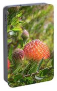 Wild Beautiful Telopea Flower In Sunset Light  Portable Battery Charger
