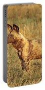 Wild Dog Of Botswana Portable Battery Charger