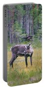 Wild Finnish Forest Reindeer 24 Portable Battery Charger