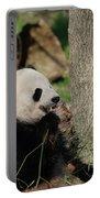 Wild Giant Panda Bear Eating Bamboo Shoots Portable Battery Charger