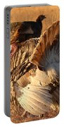 Wild Turkey Tom Following Hens Portable Battery Charger by Max Allen