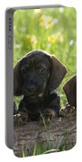 Wire-haired Dachshund Puppies Portable Battery Charger