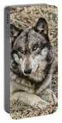 Wolf Portrait Portable Battery Charger