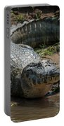 Yacare Caiman On Grassy Beach Eyeing Camera Portable Battery Charger