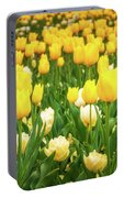 Yellow And White Tulips In Canberra In Spring Portable Battery Charger