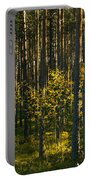Yellow Autumn Trees In Forest Portable Battery Charger