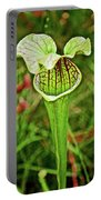 Yellow Pitcher Plant  In Huntington Botanical Gardens In San Marino-california  Portable Battery Charger