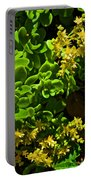 Yellow Sedum At Pilgrim Place In Claremont-california Portable Battery Charger