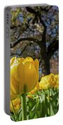 Yellow Tulips In The Public Garden Boston Ma Portable Battery Charger