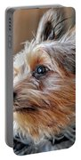 Yorkshire Terrier Dog Pose #2 Portable Battery Charger