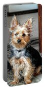 Yorkshire Terrier Dog Pose #6 Portable Battery Charger