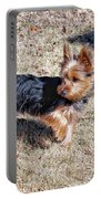 Yorkshire Terrier Dog Pose #9 Portable Battery Charger