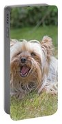 Yorkshire Terrier Is Smiling At The Camera Portable Battery Charger